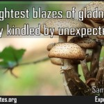 Our brightest blazes of gladness are commonly kindled by unexpected sparks Meaning