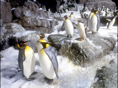 Penguin1_460x345
