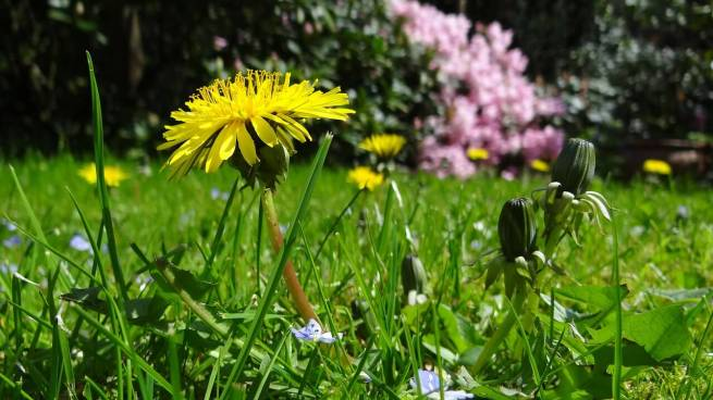 Tips to Increase the Best Broadleaf Weed Control Lawns