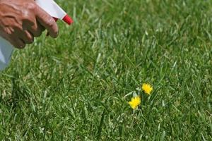 best weed killer for yards