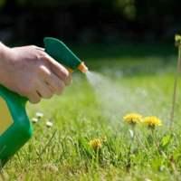 Liquid-Weed-Killer-Safe-Grass