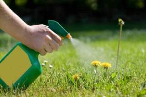 Liquid-Weed-Killer-Safe-Grass