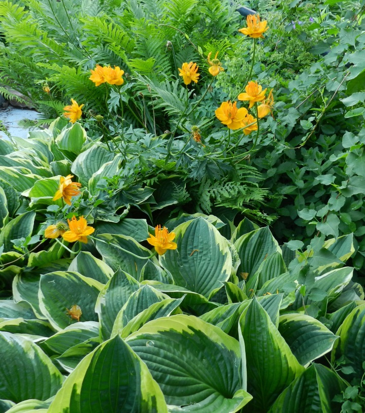 hostas with troilus and maidenhair ferns