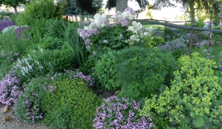 Powerful Perennials For Shade Gardens Powerful Perennials