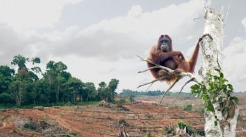 orangutan-palm-forest