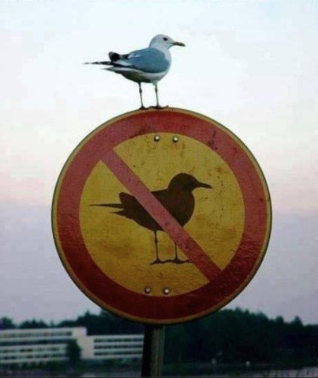 Bird Sign copy