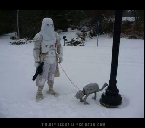 Storm Trooper Dog copy