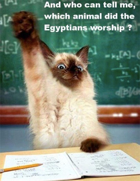 Cat Worship copy