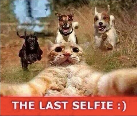 The Last Selfie copy