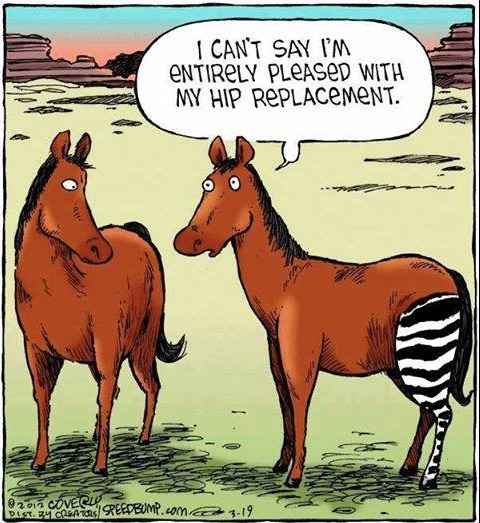 Hip Replacement copy