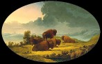 kane-buffalo-at-sunset-1856