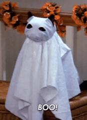 Boo cat meme