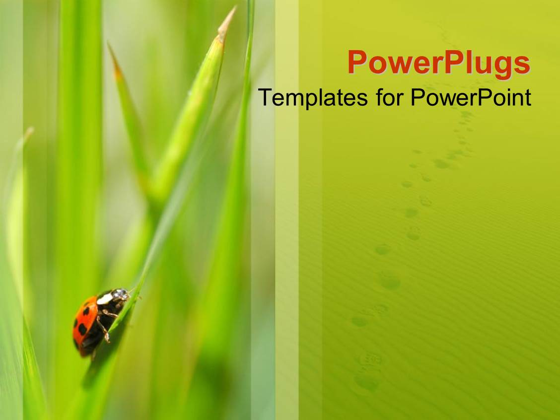 Powerpoint Template Small Ladybird Insect Of A Blade Of