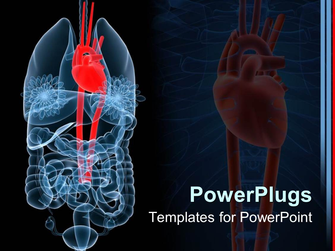 Powerpoint Template X Ray Depiction Of Human Anatomy With Red Heart Lungs And Intestines