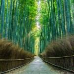 嵐山「竹林の道」の営業時間やおすすめ時間帯!ライトアップや駐車場の混雑も気になる