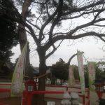 箭弓稲荷神社 - 縁結びの木