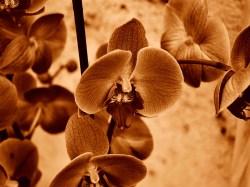 Sepia Photography [pt.7]