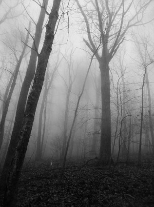 Trees in black and white.