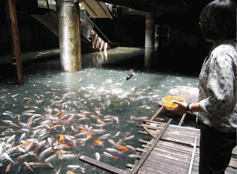 Заброшенный торговый центр Бангкока кишит рыбой.