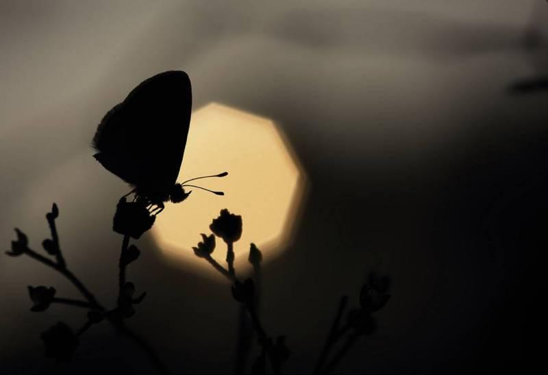 Бабочка. Макросъёмка. Karthi Keyan.