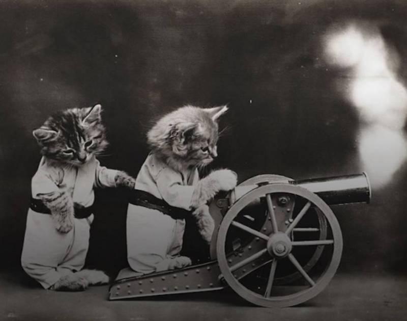 Кошки на войне.