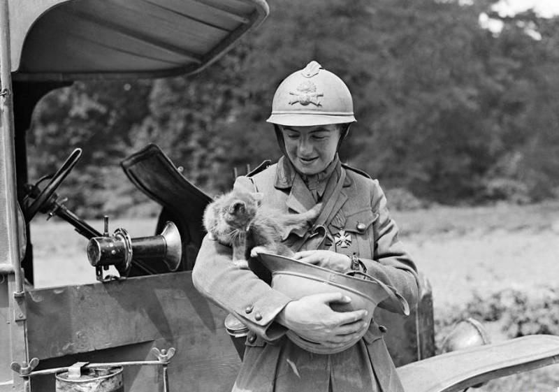 Коты Первая мировая война