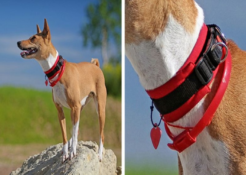 Защита прав животных в США, условия содержания собак в США