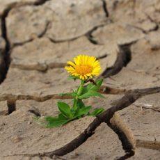 16_resil_flower-887443_1920_pixabay