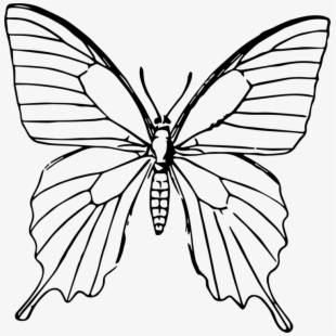 Butterfly Bright Free Image On Pixabay Drawing Transparent Cartoon Free Cliparts Silhouettes Netclipart