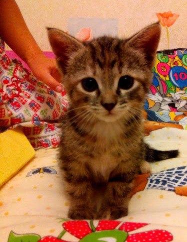 Кошка Пушинка