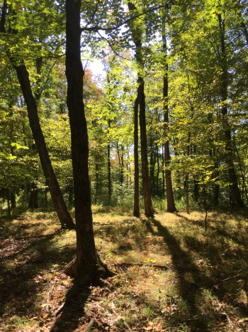 Turnpike State Forest