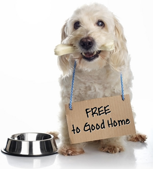 "Dog holding sign, ""FREE to Good Home"""
