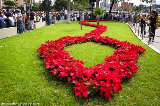Día 07 de Adviento: los jardines de Plaza Venezuela, decorados con la clásica Flor de Pascua o Poinsettia, foto de Alberto Rojas http://caracasshots.blogspot.com/
