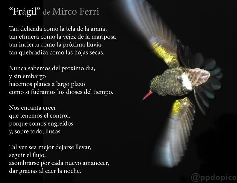 FragilMircoFerri