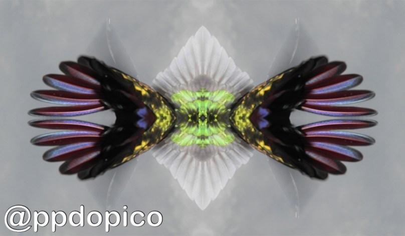 Simetria2016 0620 2471Nº01