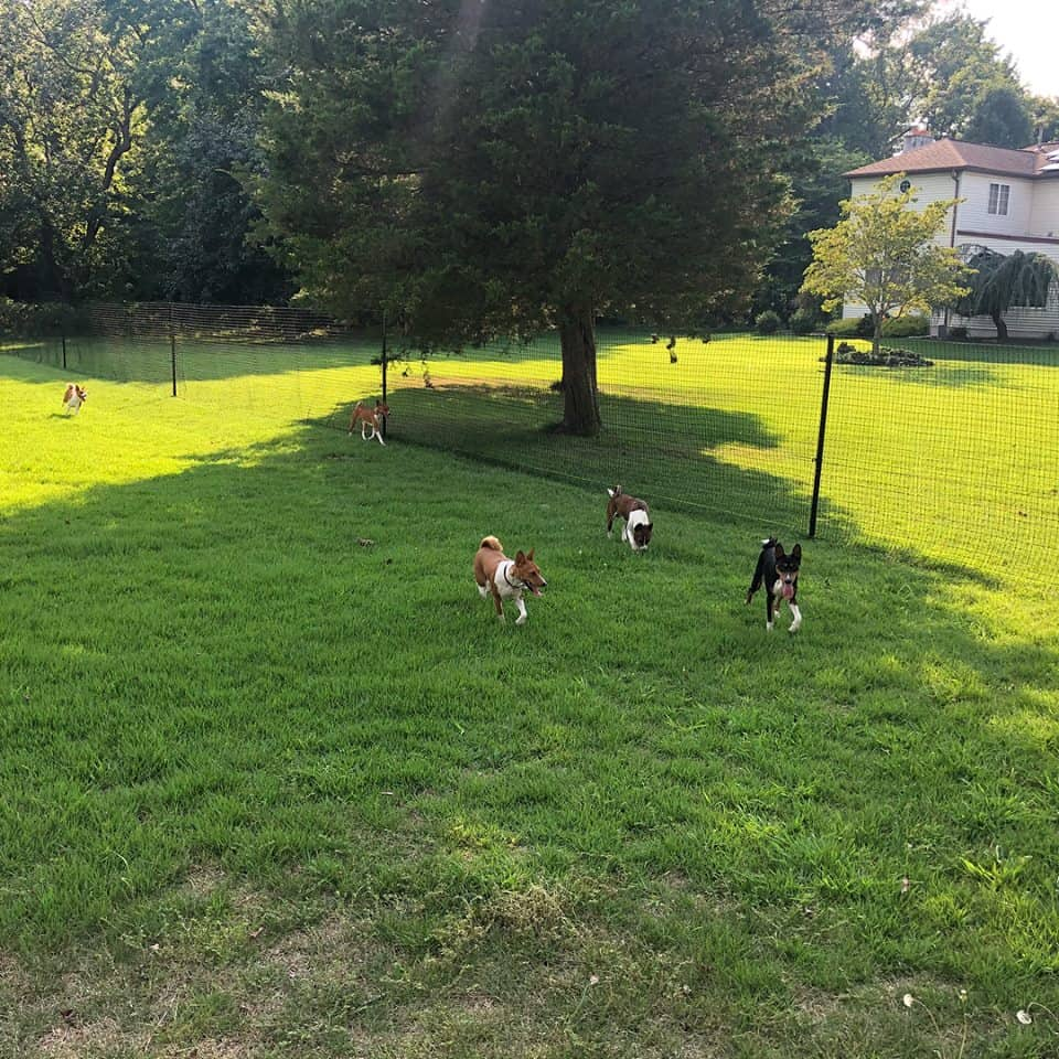 pet playgrounds diy dog fence kits