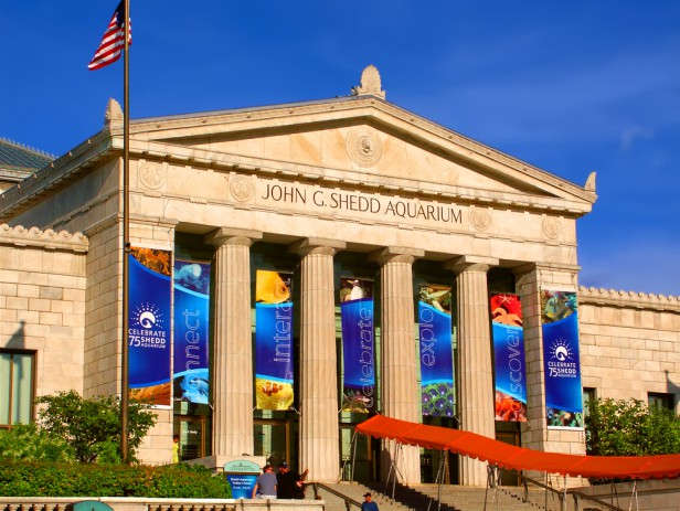 Chicago Apartments, New Year's Resolutions, Shedd Aquarium