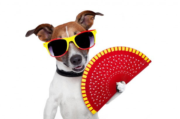 Chicago Apartments, Dog Care, Summer Tips