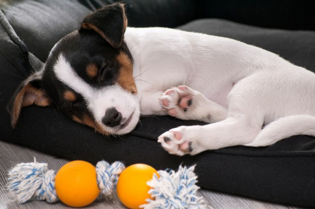 Chicago Apartments, Pet Pain Tips