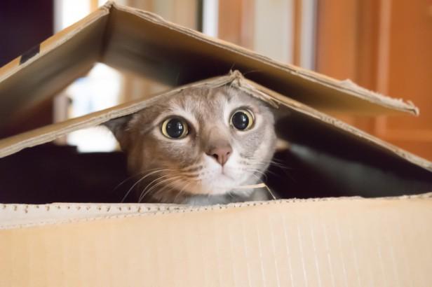 Chicago Apartments, Cat Aggression