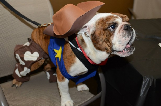 Chicago Apartments, Dog Halloween Costumes