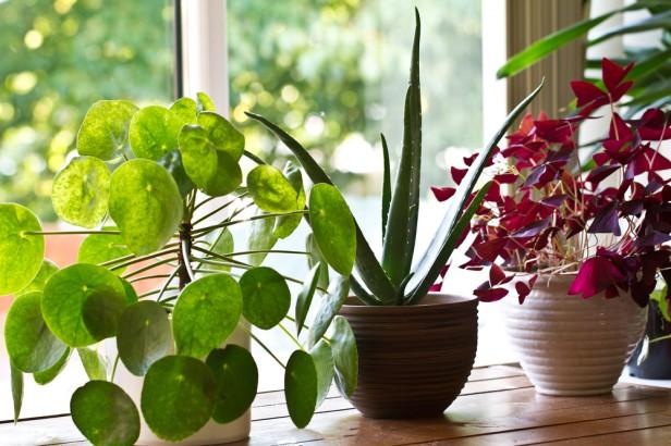 Chicago Apartments, Tea Bag Uses, Houseplant Tips