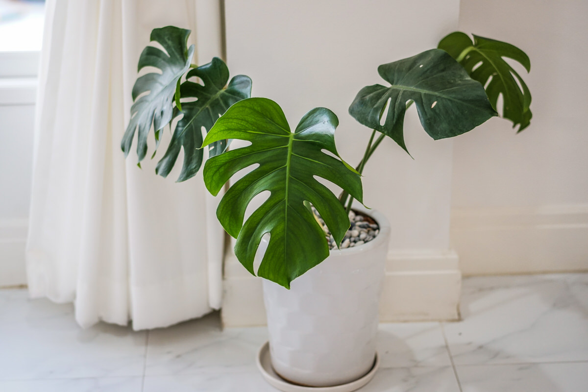5 Houseplants That Are Dangerous To Pets - PPM Apartments ... on