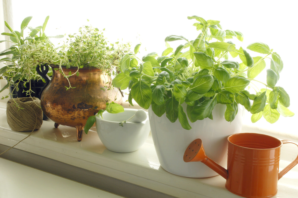 Chicago Apartments, Cheap Hobbies, Indoor Gardening