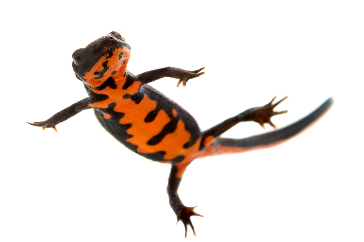 Chicago Apartments, Pets for Apartments, Pet Newts
