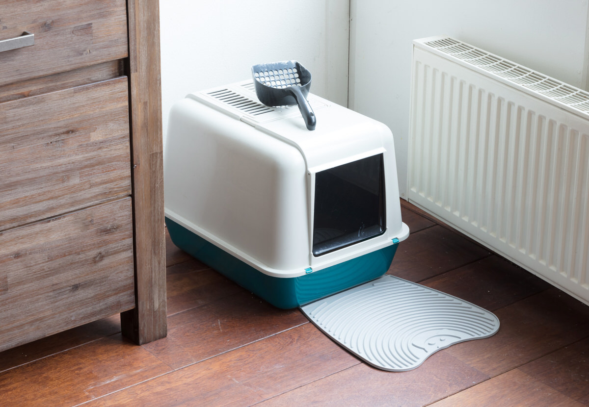 chicago apartments, litter box guide, covered litter box