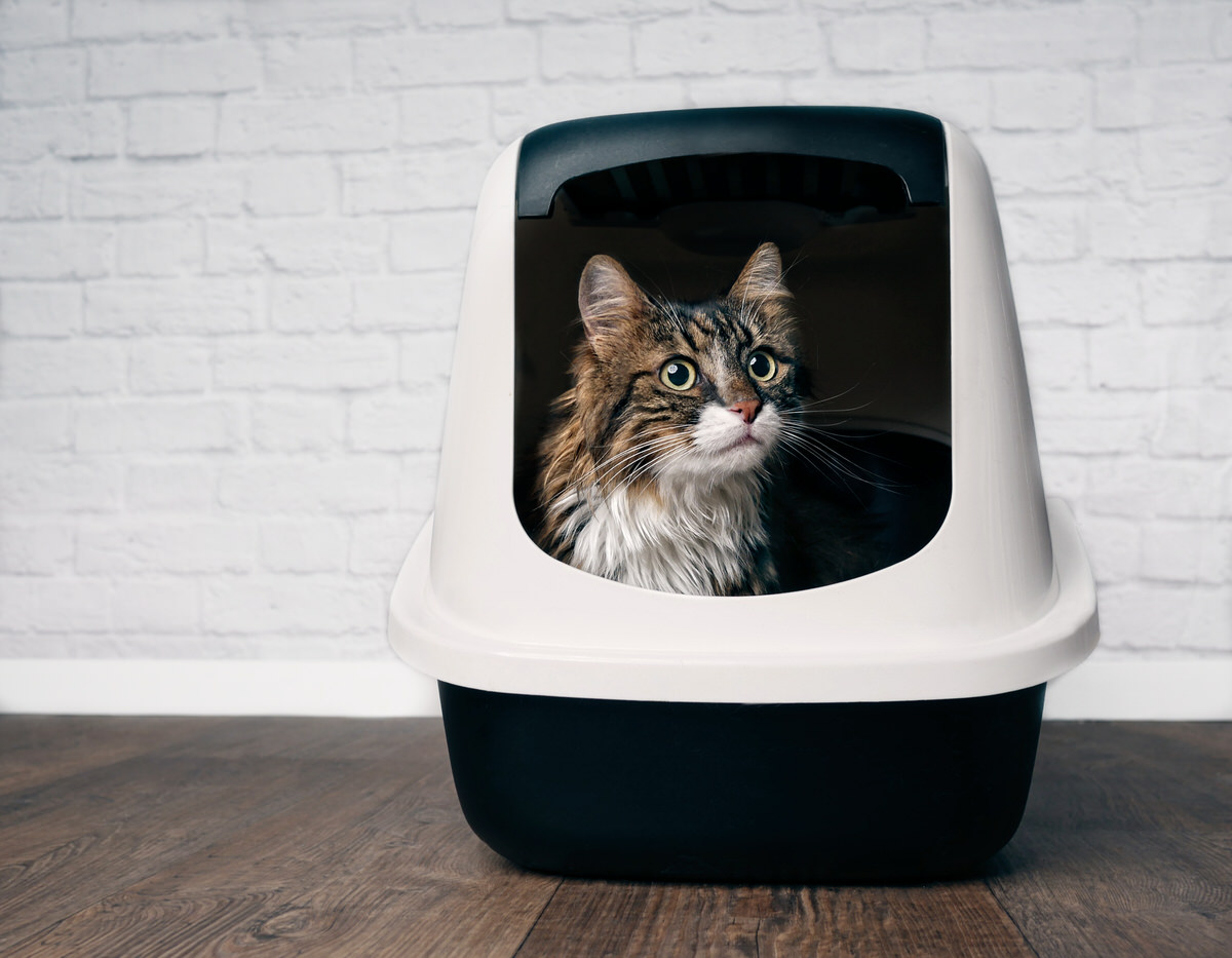 chicago apartments, litter box guide