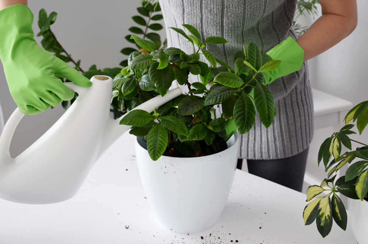 house plants for your bathroom
