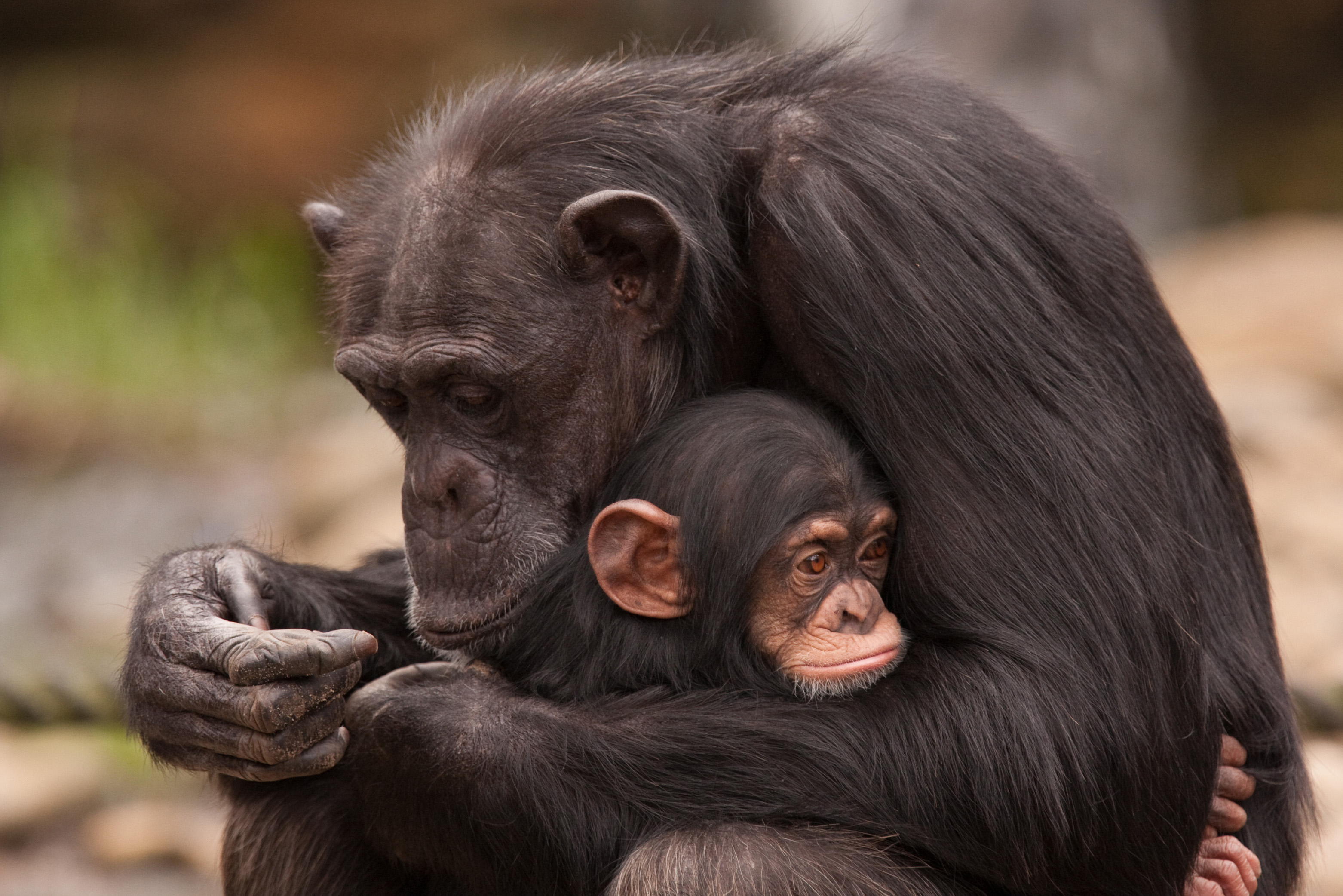 Animal Planet Celebrates Mothers Day With Moms Of The