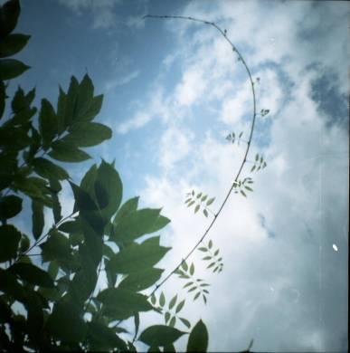 Wisteria. Diana Mini met Kodak Portra 160 NC.